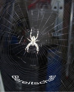 Foto: Spinne im Netz