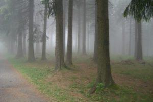 Foto, Baumstämme im Nebel