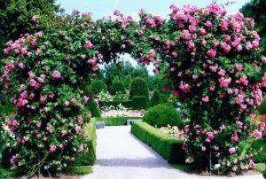 Foto eines Blumentorbogens