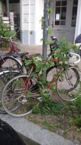Foto, Ranken wachsen am Fahrrad und einer Laterne