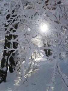 Foto Äste mit Schnee