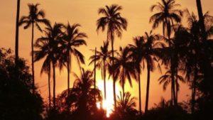 Foto mit Palmen und Abendrot