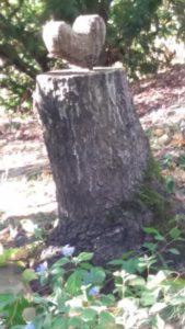 Foto abgesägter Baumstamm